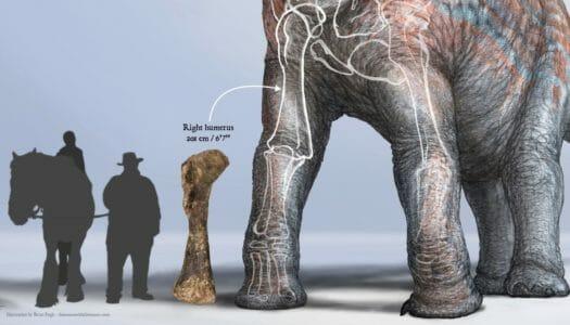 WesternU paleontologist helps recover rare Brachiosaurus in Utah